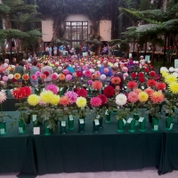 Shows/Clubs - 1st Place - Claudia Biggs - At Longwood Garden National Show