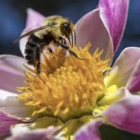 Macro View - 3rd Place - Bill Meyer - Bee Climbs Around Mingus Art