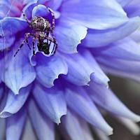 Digital Darkroom - HM - Alysia Obina - Spider