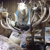 The Taxidermy Shop