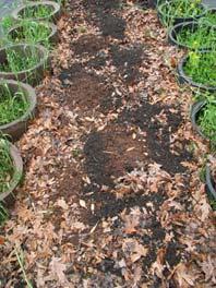 Step Five: Add compost