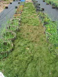 Step 3: Grass Cuttings