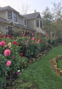 Gardening With Dahlias The American Dahlia Society
